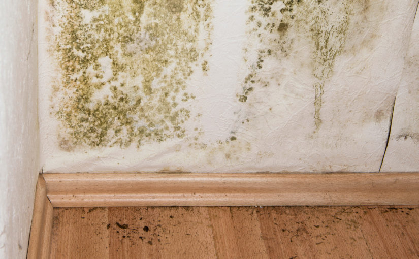The Steps in Mold Remediation